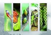 50余幅摄影作品定格生态之美
