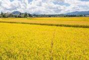 """稻田艺术、星空帐篷、农耕体验......""""逃离城市""""现在就出发!"""