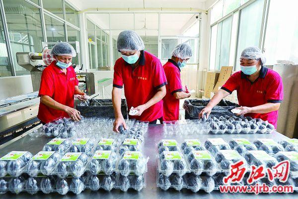 鼎峰食品有限公司生产车间里,工人在包装咸蛋。 西江日报记者 梁小明 摄