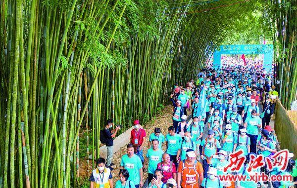 徒步爱好者行走在竹林之中,饱览广宁特色美景。 西江日报记者 曹笑 摄