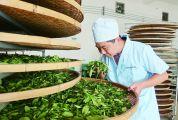 怀集县天瑞园茶业有限公司十年磨一剑 匠心造好茶